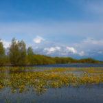 Biebrzański PN Biebrza National Park 0535