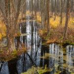 Biebrzański PN Biebrza National Park 0824