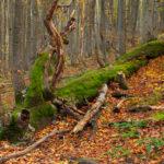 Bieszczadzki PN Bieszczady National Park 0216