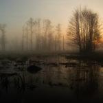Kampinoski Park Narodowy Kampinoski National Park 4670