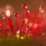 Rosiczka okrągłolistna Drosera rotundifolia 6449
