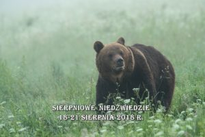 Sierpniowe niedźwiedzie02