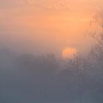 Kampinoski PN (Kampinoski National Park) 4532